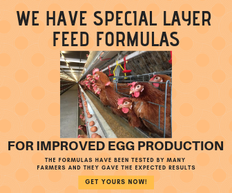 Buy Special Layer Feed Formulae