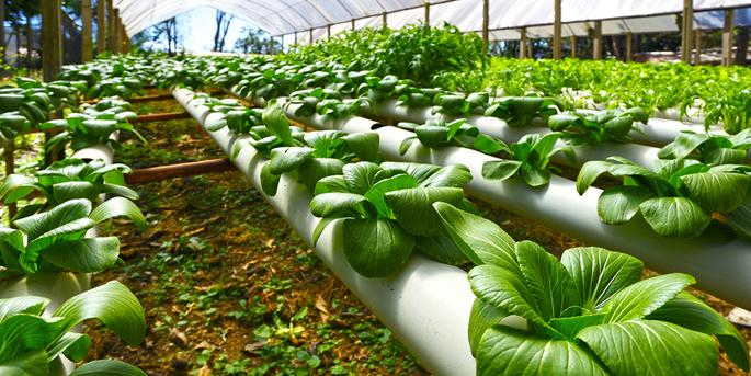 CO2 Essentials For Hydroponics