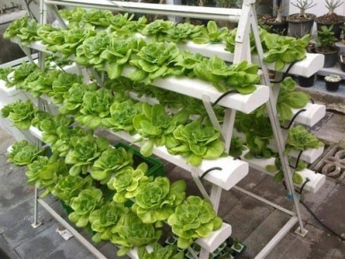 How to Make Money with Hydroponics
