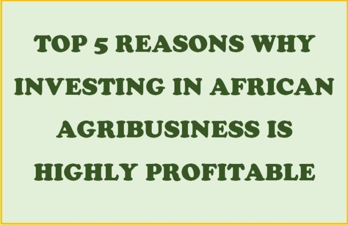 Top 5 Reasons Why Investing in African Agribusiness is Highly Profitable