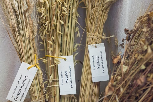 Cereal and Forage Crops: What They Are