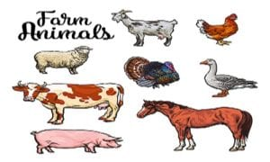 list of farm animals
