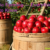 Organic Farming — Everything You Need to Know
